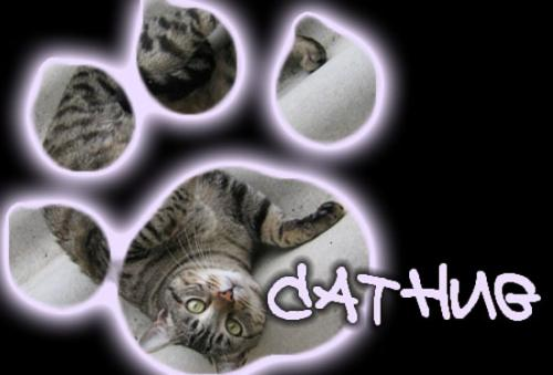 Cathug cat hug image community forum cats wiki images photo photos photo-album upload photo-albums